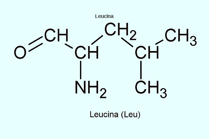 leucina