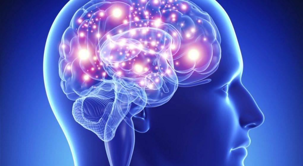 cerebro1-1020x560