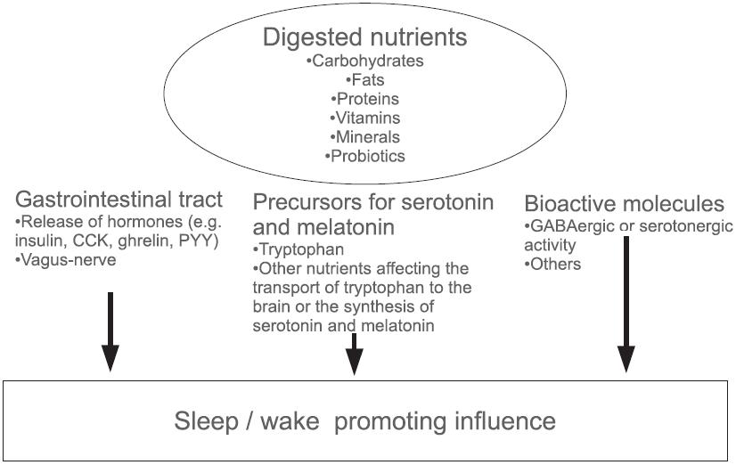 img-news-Nutrientes na Modulação da Qualidade do Sono - Figura 1